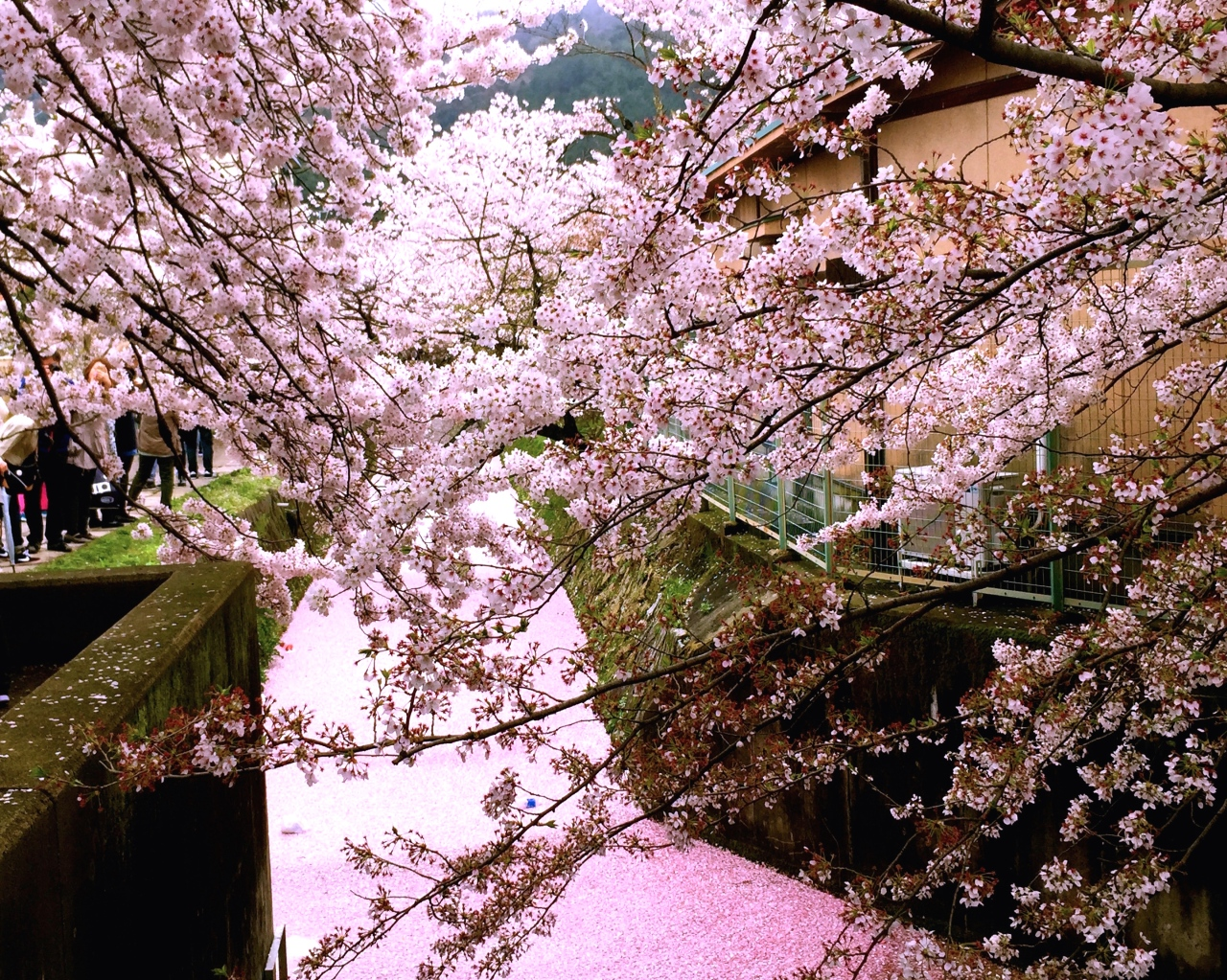 Falling in love with Japan, one prefecture at atime