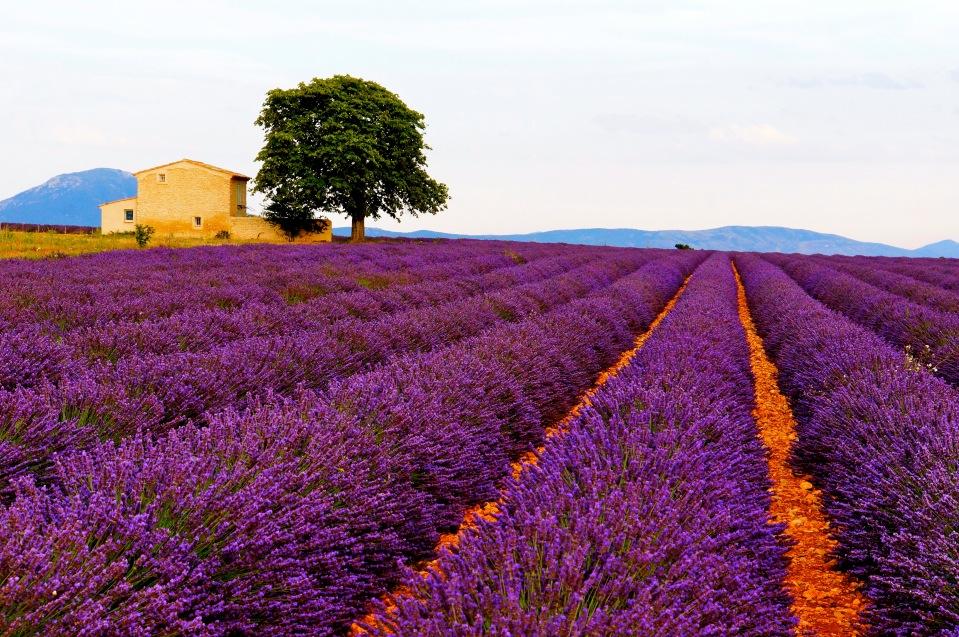 Provence01_by_steven_villacin.jpg