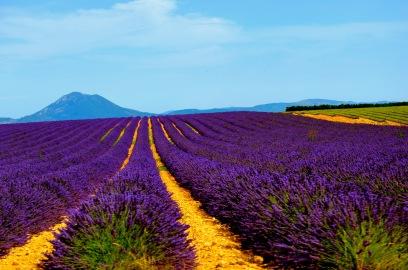 Provence02_by_steven_villacin.jpg