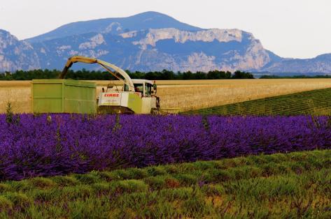 Provence07_by_steven_villacin