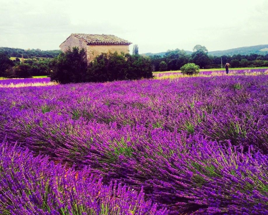 Provence08_by_tanya_lara
